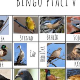Ukázka bingo ptáčci