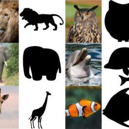 Ukázka hry Obrysy zvířata