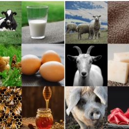 Zivocisne produkty prirazovani ukazka - na obrázku je koza, prase, ovce, vcely a krava a jejich produkty