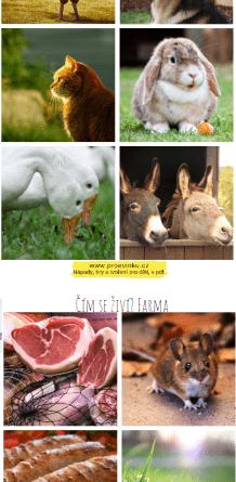 čím se živí zvířata z farmy?