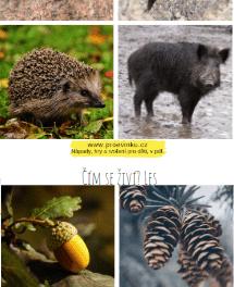 čím se živí zvířata z lesa?