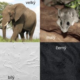 opaky s popisky - malý, velký, černý, bílý