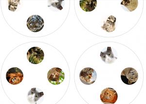 Ukázka hry dobble kočky - na obrázku vidíme lva a různé druhy domácích koček.