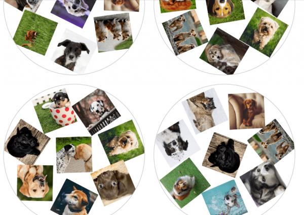 Ukázka hry dobble psi - na obrázku vidíme hrací karty se psy jako malamut, labrador a další