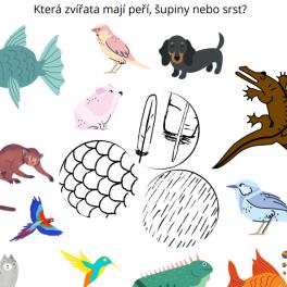 ryba, pták, morče, pes, krokodýl, opice, leguán, kolibřík, kočka adalší zvířata se mají rozřadit k obrázku peří, šupin nebo srsti