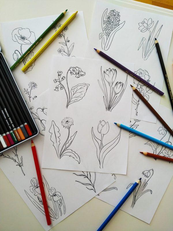 Herbář jarních květin s omalovánkami