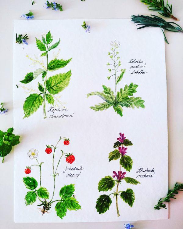 Herbář léčivých bylinek s omalovánkami