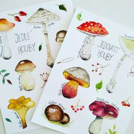 ručně malované obrázky hub