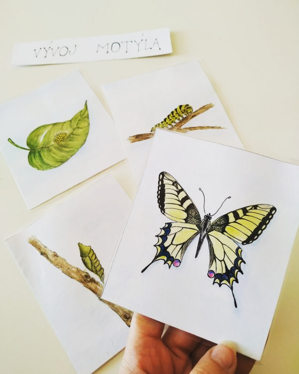 Vývoj motýla