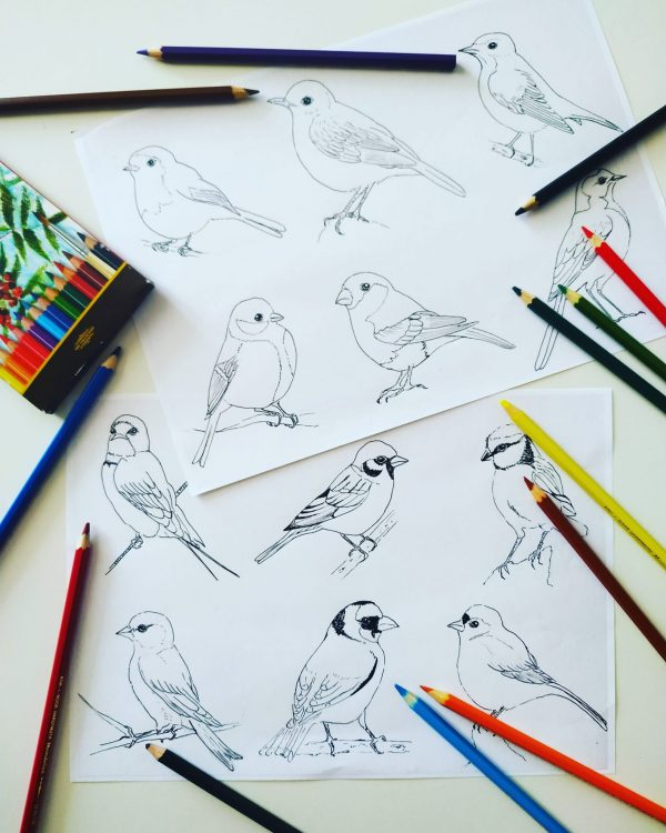 omalovánky naši ptáci