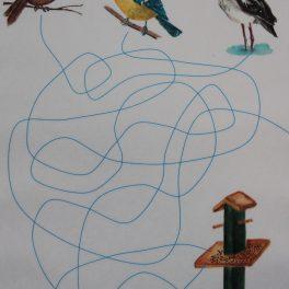 pták, ptáci, obrázek, spojování, zima