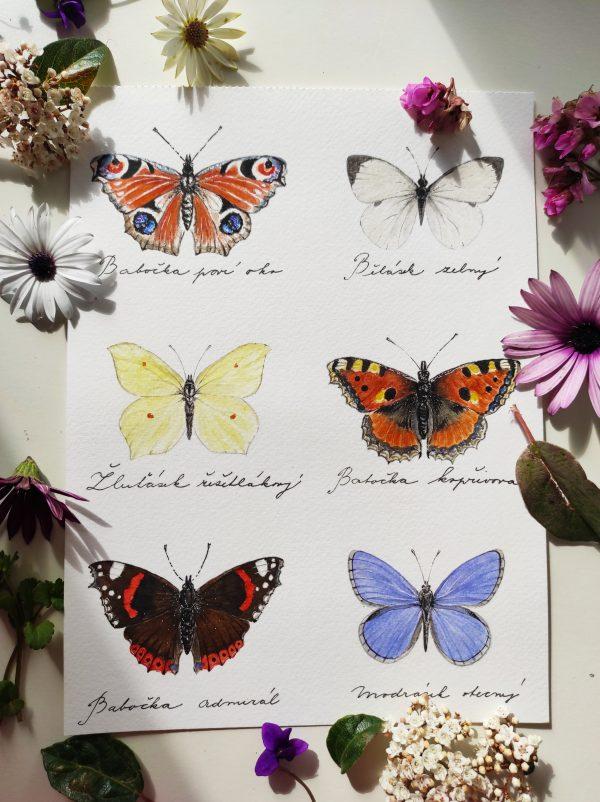 motýli, motýl, obrázek, ručně malovaný, barva, barvy