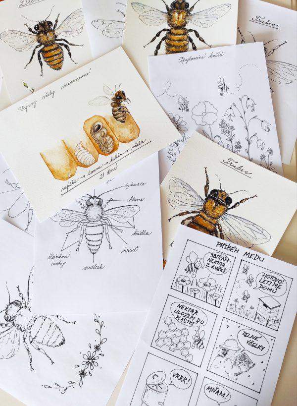 Včely, včela, hmyz, části, hlava, tělo, nožíčky, tykadla, křídla, obrázek, vybarvit