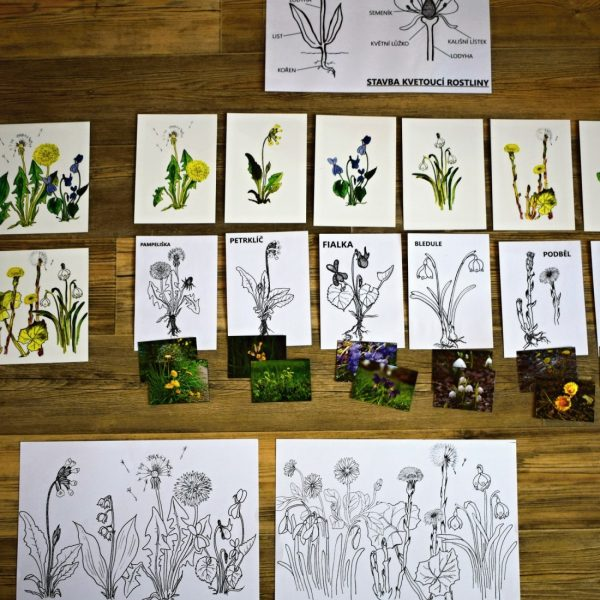 Jarní, květiny, jaro, období, kytky, květina, kytka, herbář, sběr, rostlin, rostlina, rostlinka, sbírat
