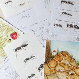 malovaní, mravenci, mravenec, malovat, namalovat, hlava, tykadla, křídla, zadek, nohy, hmyz