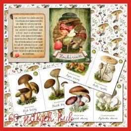 60, druhů, jedlých, hub, houba, houby